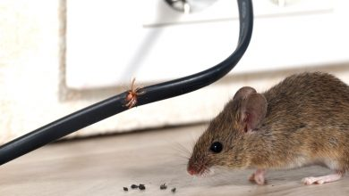 Photo of Do you want to get rid of the mice? – Here is the solution
