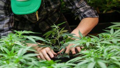 Photo of 5 Economic Benefits of Legalizing Weed