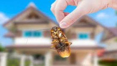 Photo of 5 Household Pests You Don't Want in Your Home