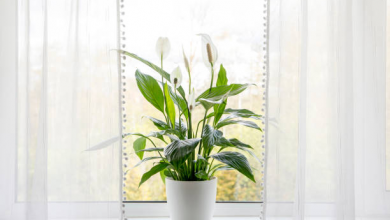 Photo of Do Air Purifying Plants Really Work?