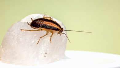 Photo of Do These 7 Things to Ward Off Cockroach Infestation in Your Kitchen